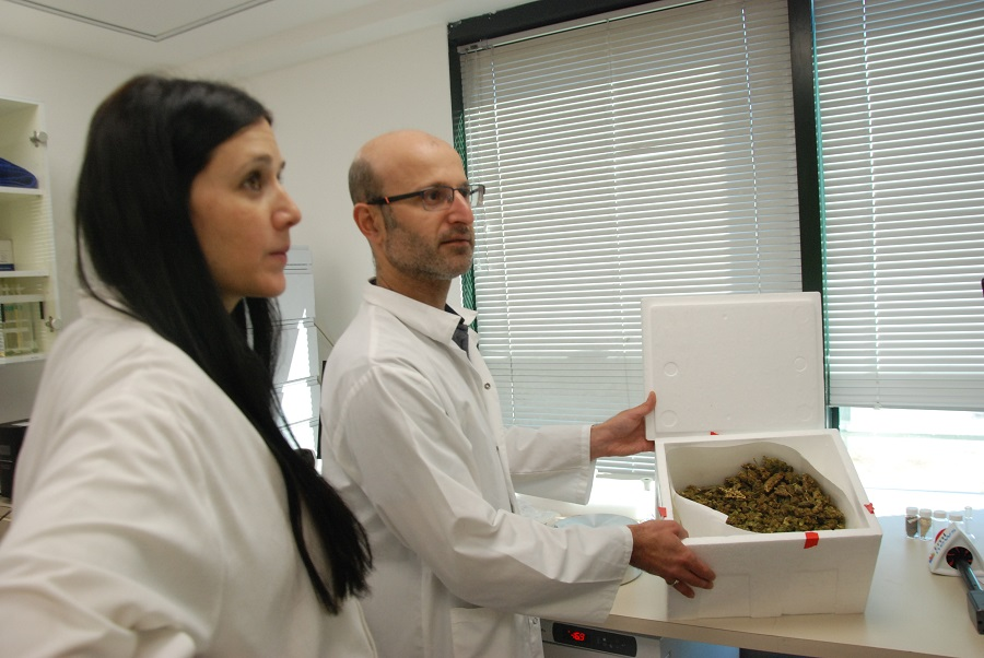Israel & Canada High On Budding Medical Cannabis Ties (with VIDEO)