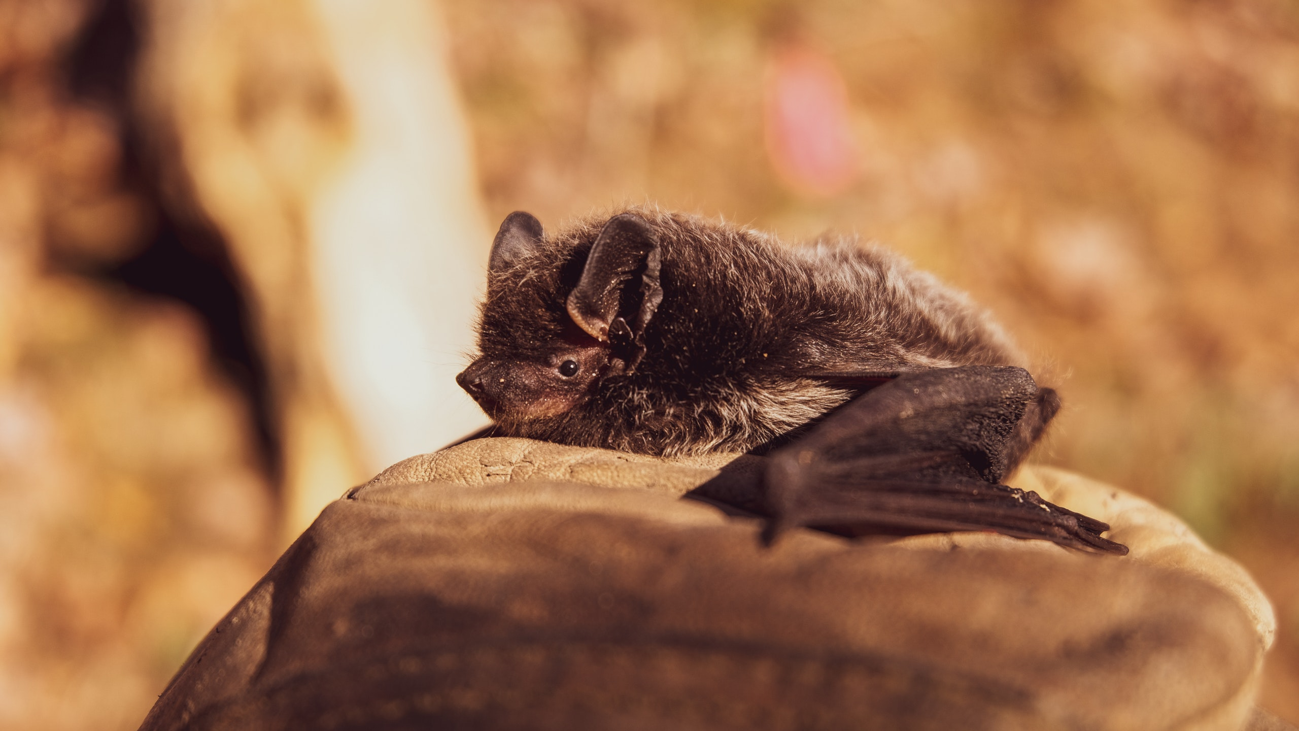 Don't Blame Bats for COVID-19, Israeli Biologists Say (VIDEO REPORT)